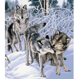 Вълци играещи в снега