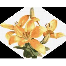 Жълта лилия