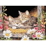 Котета в сеното