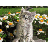 Коте сред пролетни цветя