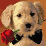Любовта на кученцето