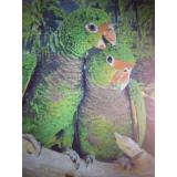 Папагали - ушит